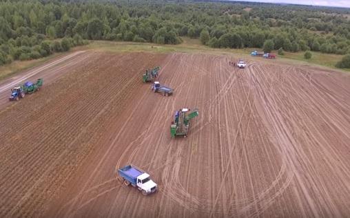 Технология уборки картофеля в России